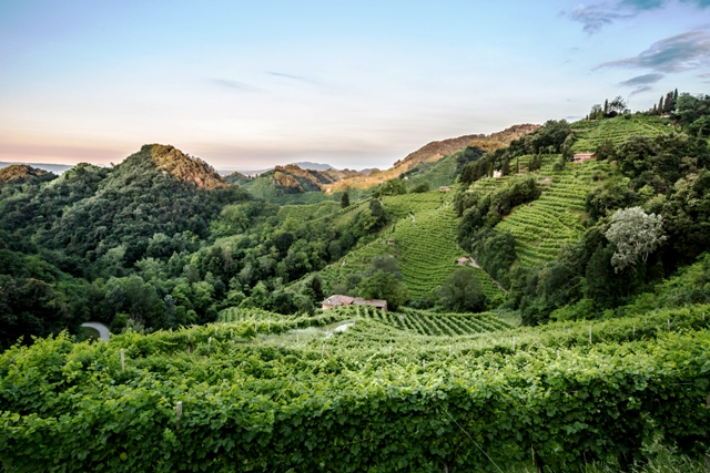 prosecco-vineyards