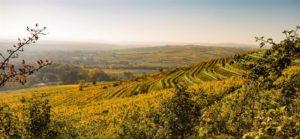 schloss-gobelsburg-vineyards