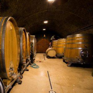 sg-dynamic-cellars