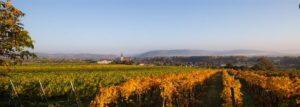 schloss-gobelsburg-estate