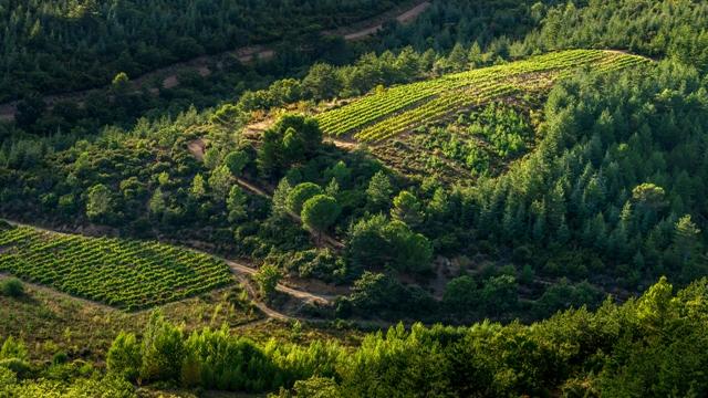 legrandnoir-vineyards